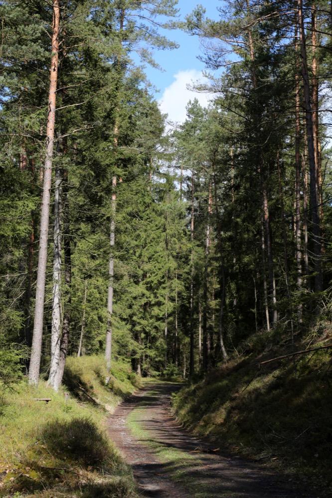 4-Waldweg-bei-Rottenbach