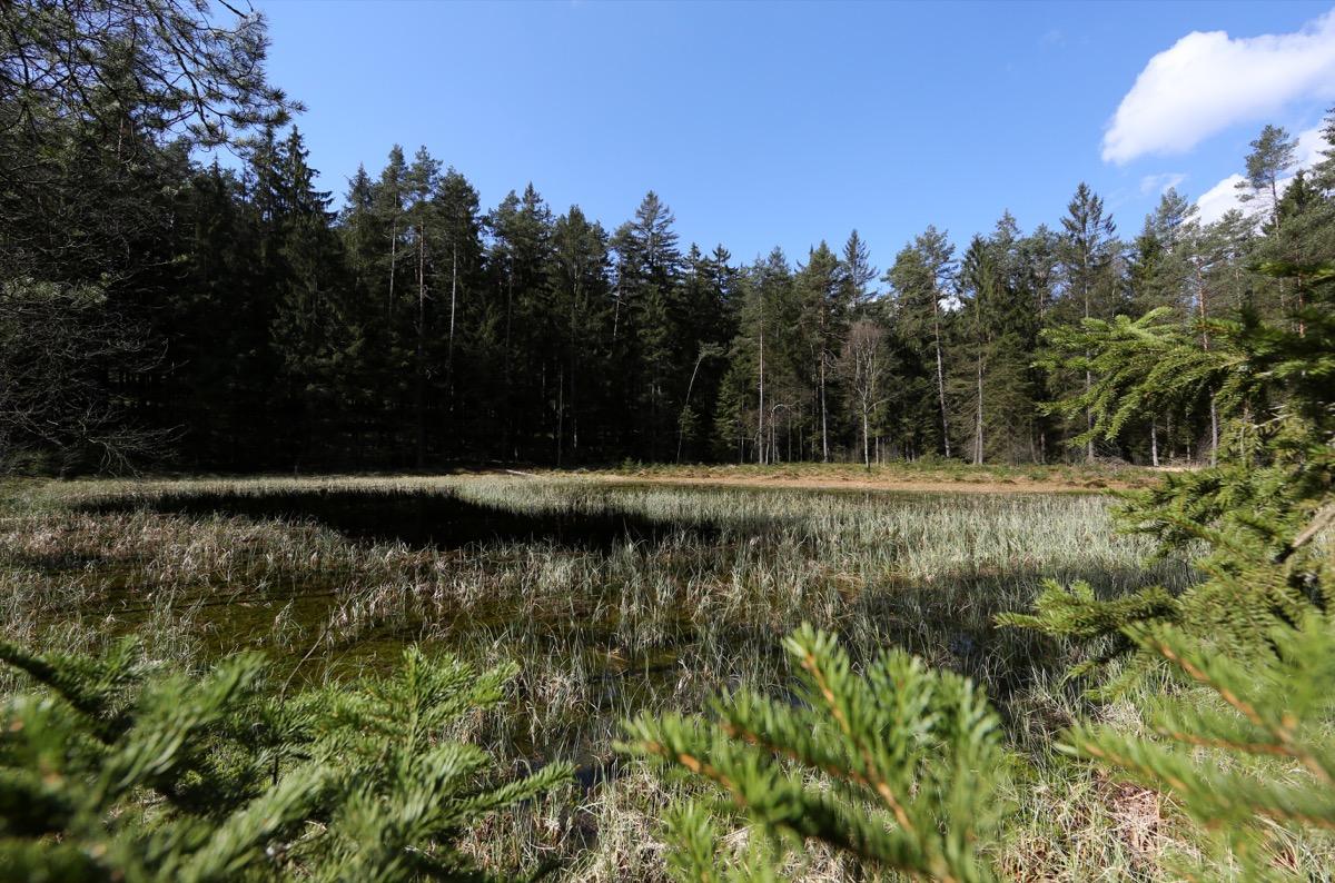 6-Rottenbacher-Moor